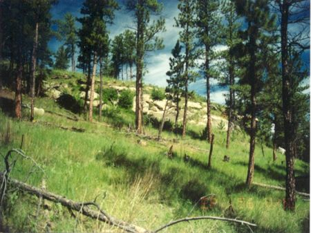 Ep-56 Open Meadow And Tree Coverage : Musselshell County : Musselshell County : Montana