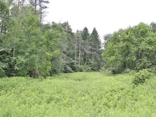 Road Frontage With A Stream : Lysander : Onondaga County : New York