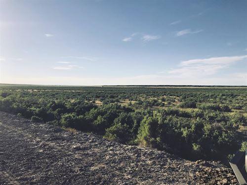 Coughlin Acres, Casper : Casper : Natrona County : Wyoming