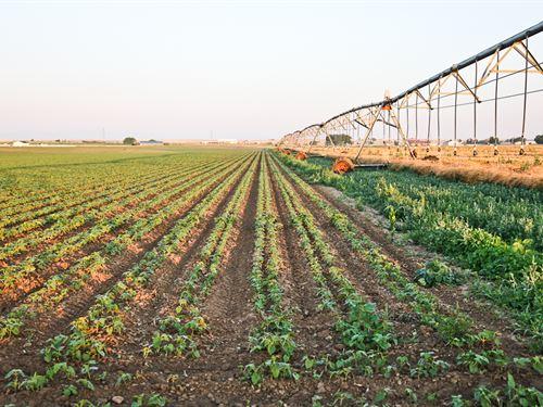 Pierce Organic Farm : Pierce : Weld County : Colorado