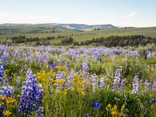 Bighorn Mountain Ranch : Greybull : Big Horn County County : Wyoming
