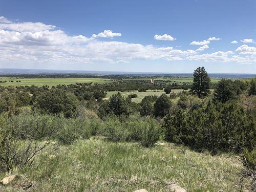 Ponderosa Pine : Beulah : Pueblo County : Colorado