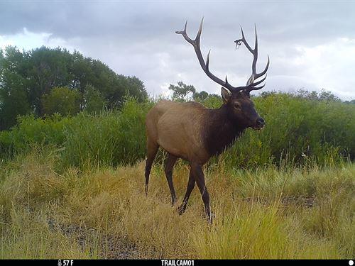 Miller Elk Island Ranch : Del Norte : Rio Grande County : Colorado