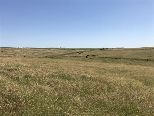 Norton County Grass Quarter : Lenora : Norton County : Kansas