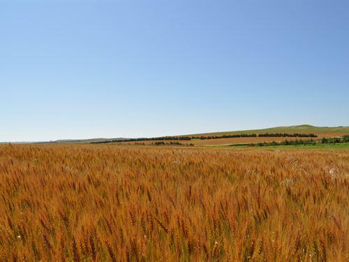 South Dakota Pheasants And Cropland : Winner : Tripp County County : South Dakota