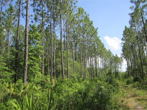 Moccasin Creek 148 Acres : Palatka : Putnam County : Florida