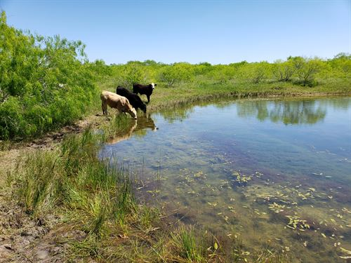 Beautiful Texas Land With Pond : Dale : Caldwell County : Texas