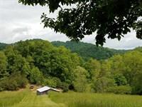 The Property Has Plenty Of Wildlife : Sneedville : Hancock County : Tennessee