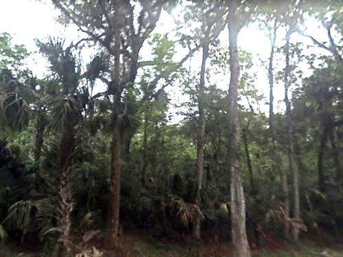 2.5 Acres Between I-95 And Us1 : Oak Hill : Volusia County : Florida