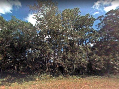 Investment Acreage $99 Down $157 Mo : Oak Hill : Volusia County : Florida