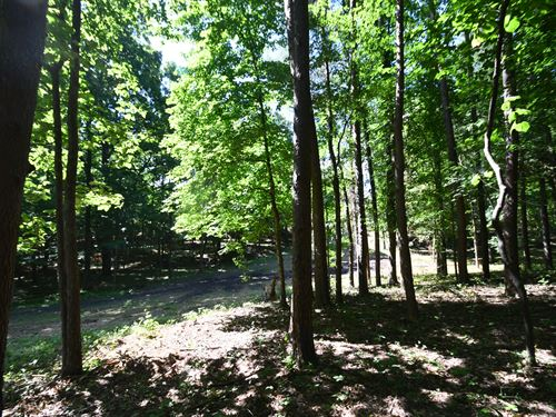 Gorgeous Hardwoods On 5 Acres : Summertown : Lewis County : Tennessee