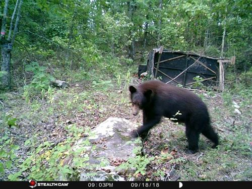 Bears, Bears, Bears Off-Grid Recre : Pickens : Pushmataha County : Oklahoma
