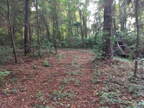 North Florida Land For Sale : Monticello : Jefferson County : Florida