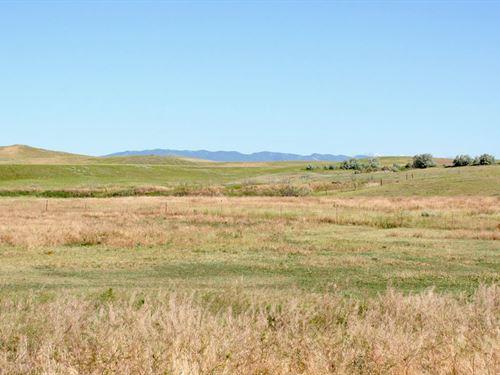 Scolari Horse Prop : Kaycee : Johnson County : Wyoming