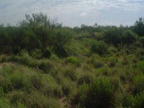 10 Acre : Ward : Ward County : Texas