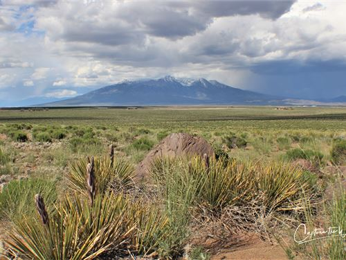 Amazing 5 Acres For Only $115/Month : Blanca : Costilla County : Colorado