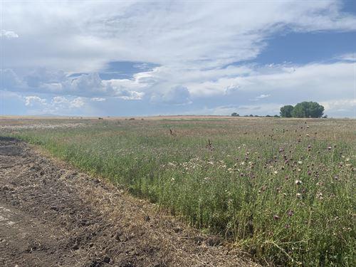 Northern Colorado Meadows : Severance : Weld County : Colorado