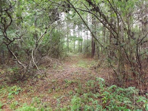 79 Acres In Jefferson Davis County : Oak Vale : Jefferson Davis County : Mississippi