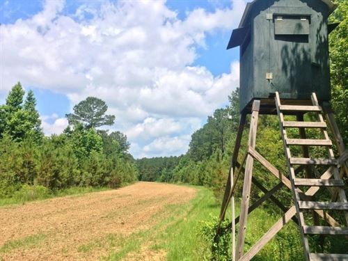 187 Acre Hunting Land For Sale Hard : Hermanville : Claiborne County : Mississippi
