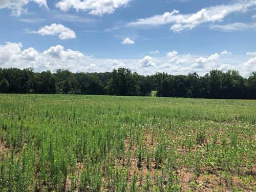 Tremendous Land Opportunity : Virgilina : Halifax County : Virginia