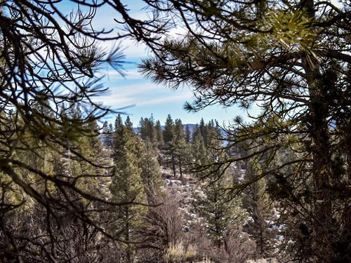 Loaded 2.03 Acres With Huge Trees : Beatty : Klamath County : Oregon