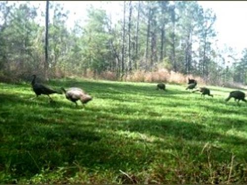 174.42 Acres In Marshall County : Holly Springs : Marshall County : Mississippi