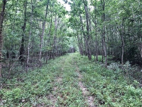 255 Acres Hunting Land For Sale Pea : Poplarville : Pearl River County : Mississippi