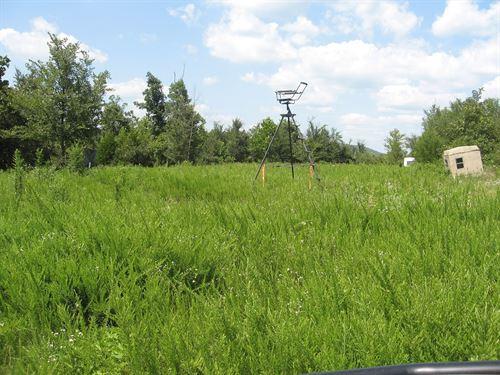 42 Acres Clear Cut Missouri Ozarks : Fredericktown : Madison County : Missouri