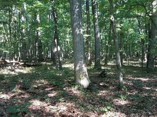 Land For Sale, Delray, WV : Delray : Hampshire County : West Virginia