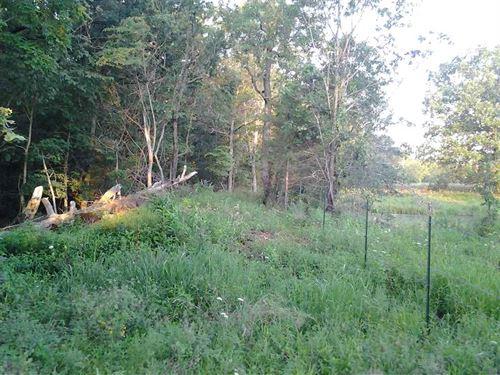 Window Through The Woods : Dixon : Pulaski County : Missouri