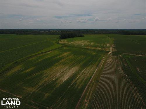 Gray's Mill Rd Farm : Snow Hill : Greene County : North Carolina