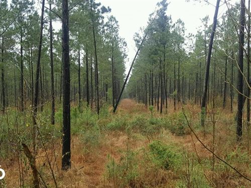 Rocky Point Hunting Land : Burgaw : Pender County : North Carolina