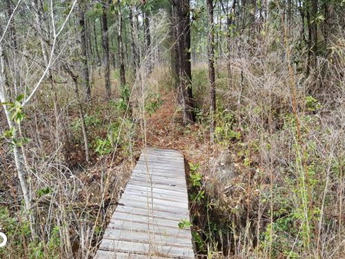 Pender 50 Acres Hunting Land : Burgaw : Pender County : North Carolina