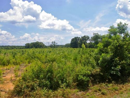 95 Acres Timber Land For Sale Tangi : Kentwood : Tangipahoa Parish : Louisiana