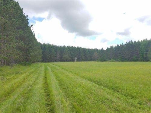 Hunting Land Sebeka/Nimrod : Sebeka : Wadena County : Minnesota