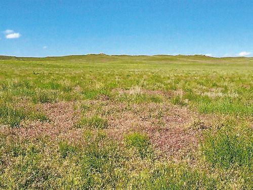 Freedom To Roam : Fort Laramie : Goshen County : Wyoming
