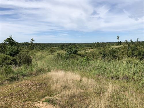160 Acre Hunting Property : Utica : Hinds County : Mississippi