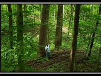 Big Timber Ridge : Chandlersville : Muskingum County : Ohio