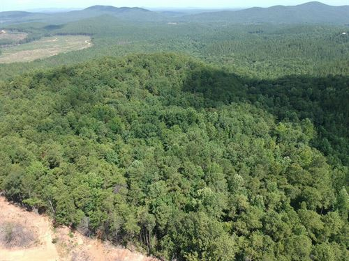 40+/- Acres Of Mature Timberland : Ashland : Clay County : Alabama