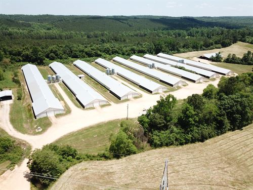 Adcock Poultry : Hackleburg : Marion County : Alabama