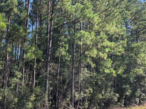 52 Acres / Enon / Louisiana / Hwy : Enon : Washington Parish : Louisiana