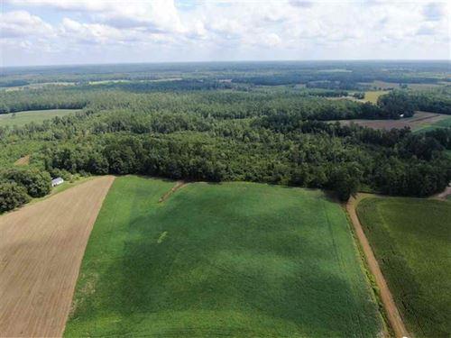 188 Acres of Farm And Timber Land : Cerro Gordo : Columbus County : North Carolina