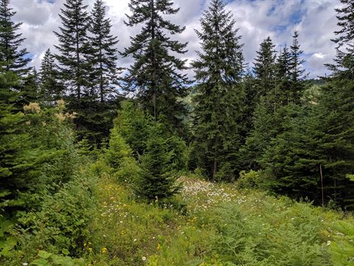 7 Acres Clearwater County, Idaho : Orofino : Clearwater County : Idaho