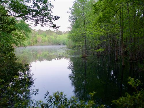 Fish Pond Tract : Estill : Hampton County : South Carolina