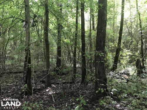 Abandoned Road Timber And Hunting : Fulton : Itawamba County : Mississippi