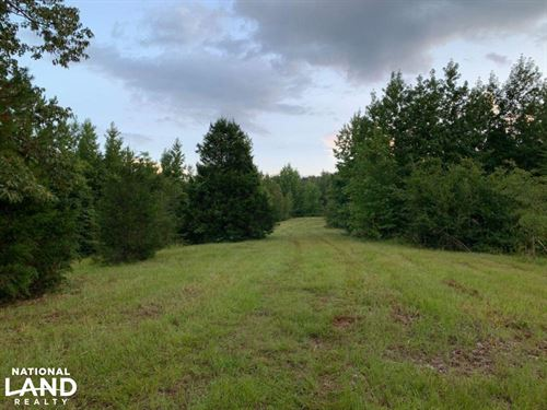 Hunting, Investment And Timber : Carthage : Leake County : Mississippi