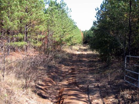 44 Acres : Jeffersonville : Wilkinson County : Georgia