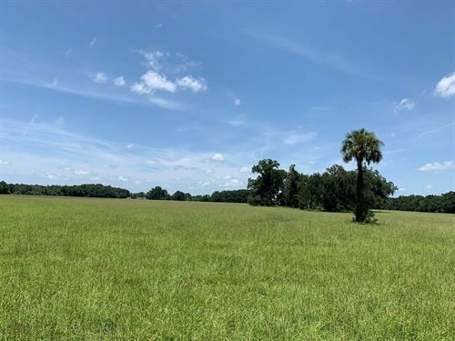 Residential Land, 86 Acres : Chiefland : Levy County : Florida