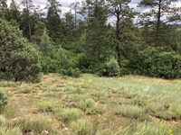 Mountain Meadow Lot Trees Northern : Chama : Rio Arriba County : New Mexico