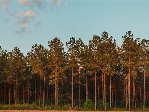 Mayfield Woods : Warrenton : Warren County : Georgia